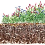 Add Another Root for Cover Cropping