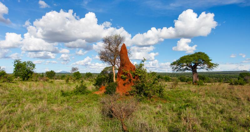 termite-mound_800
