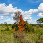 Termites – Pests or Saviors?